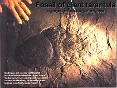 gigantická tarantula